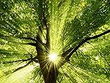 Artland Echt-Glas-Wandbild Deco Glass smileus Sonne strahlt explosiv durch den Baum Botanik Bäume Laubbaum Fotografie Grün 60 x 80 x 1,1 cm B6VC