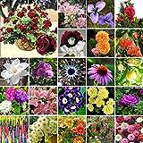 AGROBITS 1-Fledermausblume (5Pcs): 5-20000Pcs Mixed-Stile Seltene Pflanzen Blumensamen Gartenbonsai Dekoration