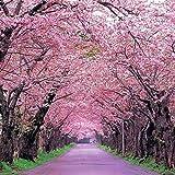 Shopmeeko 20 teile/beutel sakura brunnen weinende kirschbaum Zwerg japanische blüten bonsai blume für DIY Hausgarten pflanze: 08