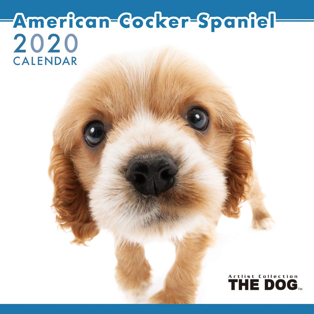 The Dog Wall Calendar 2020 American Cocker Spaniel
