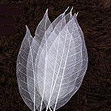WHK 100 Pezzi Foglie di Scheletro - Foglia di Magnolia, Foglie Naturali Carta Fai da Te abbellimenti Scrapbooking Decorazioni
