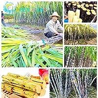 RETS 100pcs Caña de Azúcar s vehículo y Las Frutas al Aire Libre Bonsai Bonsai s fácil de Cultivar para el hogar & amp; Jardín Sement: Verde del ejército