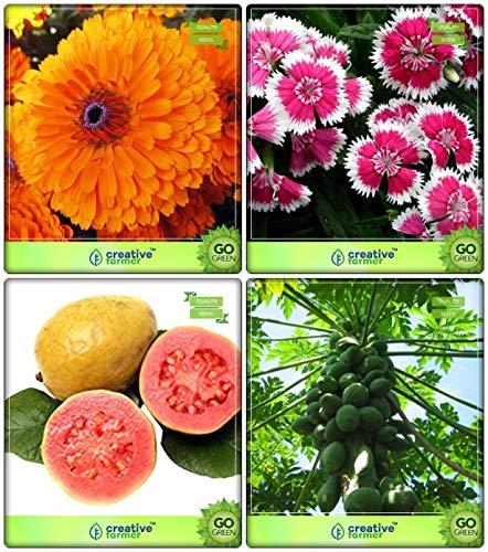 Potseed . Alle Klima Combo: Zitrone-Guave, Papaya, Ringelblume, Dianthus-Baby Doll Blumensamen Terrasse Garten -