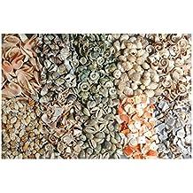 Muschelsortiment gebohrt Bohrung ✓ Lochgr/ö/ße ca 1-2 mm ✓ Muscheln in verschiedenen Sorten zum Auff/ädeln ✓ Muschelmix zum basteln ✓ selber einzigartige Sc 1kg ✓ wundersch/öne Muscheln zur Schmuckherstellung ✓ Schmuckperlen mit Loch