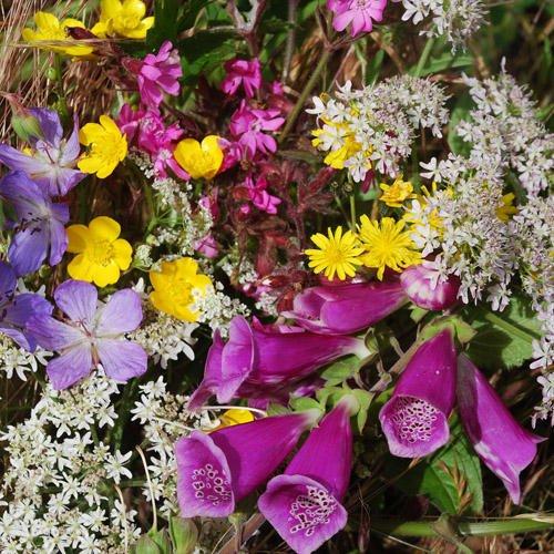 Wild Flower Mix - Meadow Mixture (Daisy Rattle)