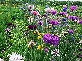 Qulista Samenhaus- 50pcs Wildblumenwiese Mischungen 10m² für Bienen Schmettling Insekten Blumensamen mehrjährig (Aktion Wildblumen 2019: blühende und summende Steiermark) (E)