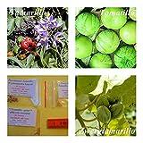 Baumtomate (Tamarillo)- 2 Arten (je 20 Samen) und 20...