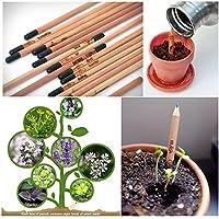 Crayon Sprouting à Base de Plantes Semences Plantables pour Les Enfants Bricolage Cadeau D'anniversaire Paquet de 8 (5 Paquets)