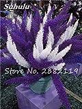 SwansGreen 4: Der niedrigste Preis! 100 PC-Foxtail Samen Mixed Foxtail Ferns Bonsai Gras Pflanzen Stauden Blumen Natur Wachstum für Heim & Garten 4