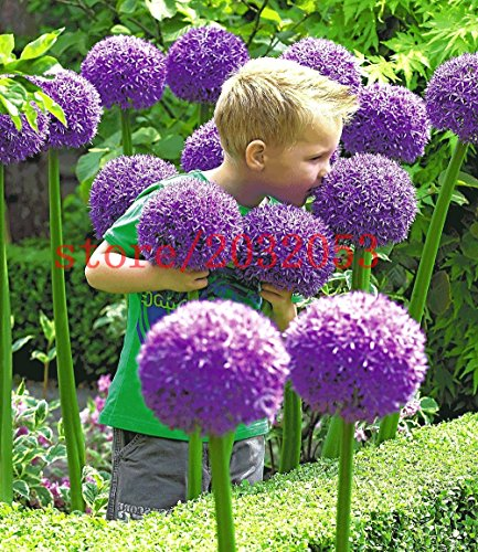 fiori x giardino
