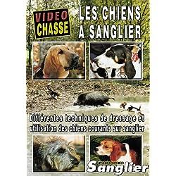 Les chiens a sanglier - Vidéo Chasse - Chasse du grand gibier