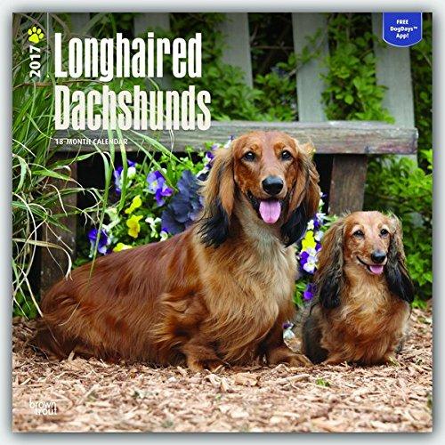 Longhaired Dachshunds - Langhaardackel 2017-18-Monatskalender mit freier DogDays-App: Original BrownTrout-Kalender [Mehrsprachig] [Kalender] (Wall-Kalender)