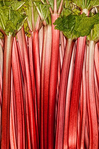 Rhabarber ''Victoria 40 Samen -Superior-Vielfalt, nicht seit 150 Jahren verbessert -