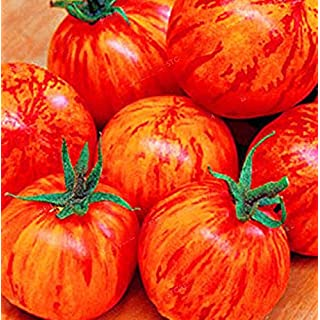 AIMADO 100/30/20 Stücke/Beutel Rot Grün Gelb Ernährung Gemüsesamen Gewächshaus Vergossen Bio Gemüse & Obst Samen Gemüsesamen Hausgarten Pflanzen