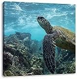Schildkröte im Pazifik, Format: 40x40 auf Leinwand, XXL riesige Bilder fertig gerahmt mit Keilrahmen, Kunstdruck auf Wandbild mit Rahmen, günstiger als Gemälde oder Ölbild, kein Poster oder Plakat