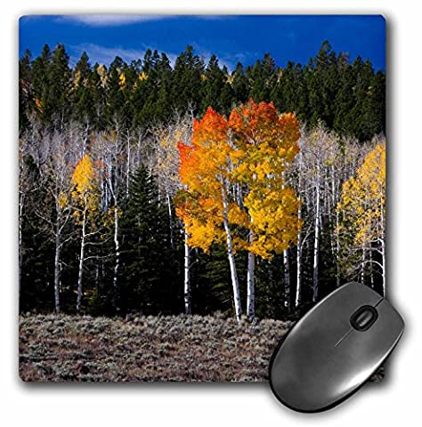 Danita Delimont - Scott T. Smith - Forests - Utah, USA, Aspen trees in autumn. Fish Lake Basin. Fishlake NF. - MousePad (mp_191906_1)