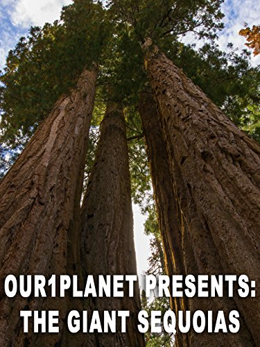 Our1Planet Presents: The Giant Sequoias [OV]