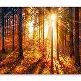 murando - Fototapete Wald 3D 350x256 cm - Vlies Tapete - Moderne Wanddeko - Design Tapete - Wandtapete - Wand Dekoration - Landschaft Natur Sonne Grün Bäume Sonnenuntergang c-B-0162-a-c