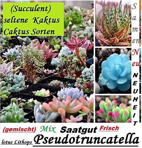 30x Succulent Selten Kaktus Samen Pflanzen 2016 Ernte 100% Ausbeute Mix gemischt Neu 2016 Pflanze Neu 2016 Ernte 100% Ausbeute #104 - Kaktus Mix