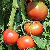 10 Samen Noire De Crimée Tomate – aromatische Fleischtomate, russische Sorte