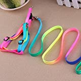 ROYALE CAT Colourful Adjustable Nylon Puppy Leash Harness, Small