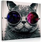 RAIN QUEEN cool Katze mit Sonnenbrille 50*50 HD Lein Kunstdruck Poster Bild Wandbild Holz Rahmen (ready to hang)