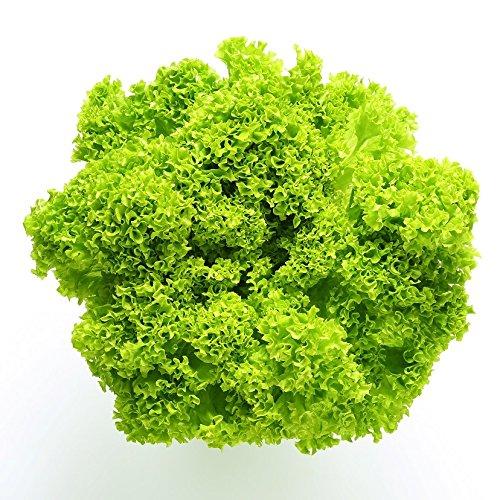 Salat Lollo Bionda Samen - lattiche Sativa