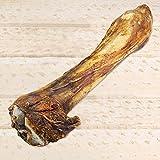 Pferdeknochen XXL Länge ca 35 cm Große schwere Beinknochen vom