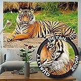 Fototapete Majestätischer Tiger Wanddekoration - Wandbild Wildkatze Poster-Motiv by GREAT ART 210 x 140 cm