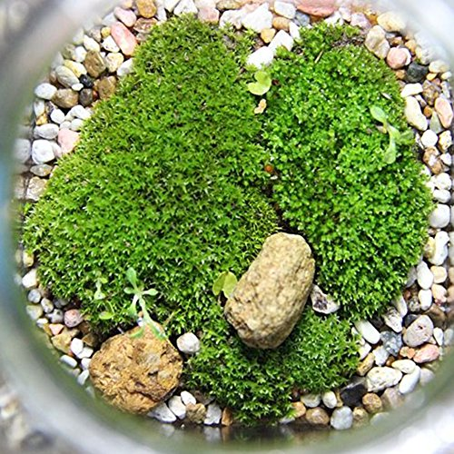 Christine Künstlicher Moos Qualitätsbauer Frühlingsgrün Kunststoff Acryl Deko-Moos für Blumengestecke oder Feengärten, grün, Free Size