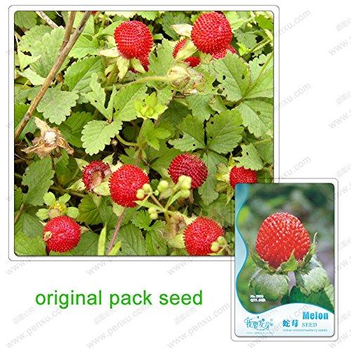 60 graines / Pack, graines Duchesnea, fruits vert bio terrasse de jardin non-OGM et semences de légumes