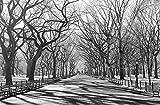 Foto, mural, pared posters, gran formato, 175x115 cm, Blanco y Negro, Arte y Tendencia, Camino, Nueva York, EE.UU., Negro, Blanco, árboles, avenida, lluvia, otoño