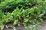 Portal Cool Las semillas del paquete: Comprado 3 + 2 Disponible: Poiree verde para frenar - MultiSeason! - Lote de 50 semillas Mini + Kdo