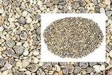 NaDeco Muschelmix Mini 1kg ca. 0,5-2cm | kleine Bastelmuscheln | Kleine Muscheln zum basteln | Muscheln im Mix klein | Dekomuscheln | Deko Muschel | Deko Schnecken | Maritime Dekoration - 2