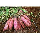 50pcs / bolsa de Alto Rendimiento Vegetable Seeds Ipomoea batatas semilla de planta gigante de la patata dulce comestibles vegetales de hoja verde