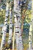 Posterlounge Leinwandbild 100 x 150 cm: Birkenstämme von Carl Larsson/ARTOTHEK - fertiges Wandbild, Bild auf Keilrahmen, Fertigbild auf Echter Leinwand, Leinwanddruck
