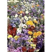 Tropica - fiori campo pirenei colori provenza