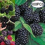 obiqngwi 100Pcs Semi dell'albero di Neroberry Nutriente Casa Giardino Bonsai Raspberry Pianta da frutto - Semi di Neroberry