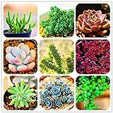 Vente 10pcs! 99 types de choisir Lithops Seeds Succulentes Graines Bureau Pseudotruncatella Bonsai Flower Seeds, # PCEWAZ...