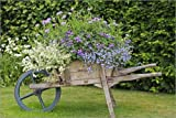 Posterlounge Tableau en Aluminium 100 x 70 cm: Wooden Wheelbarrow Planter de Keith Wheeler/Science Photo Library