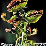 Neue Ankunfts-Hausgarten-20 Samen Venusfliegenfalle muscipula Fleisch fressende Pflanzen-Samen