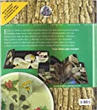 Image de Árboles: De la semilla al imponente bosque (Infinity (oniro))