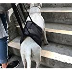 Dog Lift Support Harness Help Elderly Injured Disabled Arthritis ACL Pet Stand Up/Walk/Climb Stairs/Crawl into Car… 9