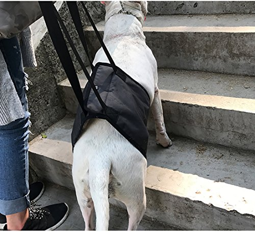 Dog Lift Support Harness Help Elderly Injured Disabled Arthritis ACL Pet Stand Up/Walk/Climb Stairs/Crawl into Car… 3