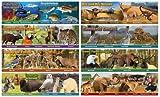 Wildlife Habitats Mini Bulletin Board Set