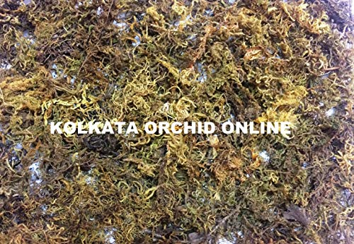 KOLKATA ORCHID ONLINE Sphagnum Moss for Orchid Plant Soil, 250g (Green and Brown)
