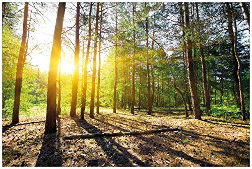 Wallario selbstklebendes Poster - Sonnenstrahlen tief hinter dem Wald in Premiumqualität, Größe: 61 x 91,5 cm (Maxiposter)