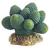 Hobby 37018 Kaktus Atacamma, Höhe 7 cm