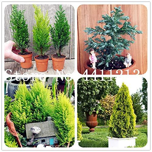 Pinkdose 30 pcs/sac chinois long haricots Vigna Unguiculata plante-pods Niébé Serpent savoureux haricots Jardin potager à long Bean SeedsPlanta: 2