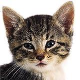 Buggy-Buch, Katzenbabys